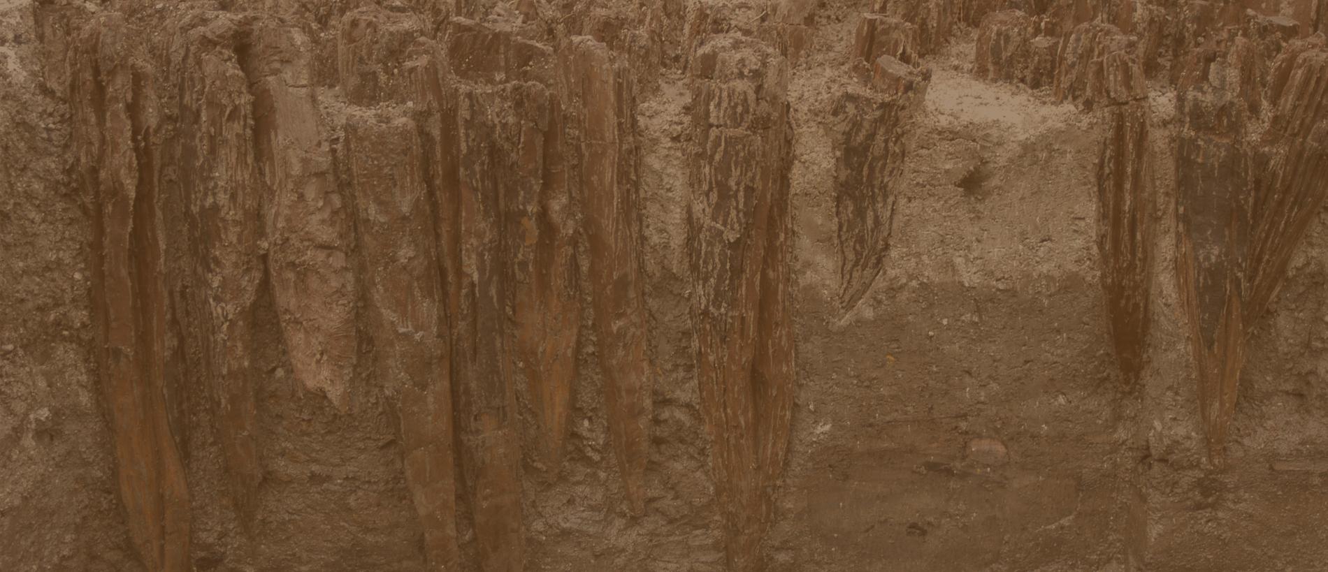 Dendroarchaeologie-Slider-6